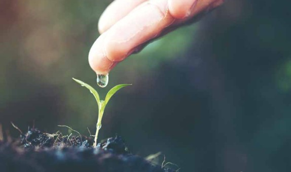 Yeşil Kampüs Uygulaması: Kampüs Atıksularının Sulama Amacıyla Yeniden Kullanımı class=